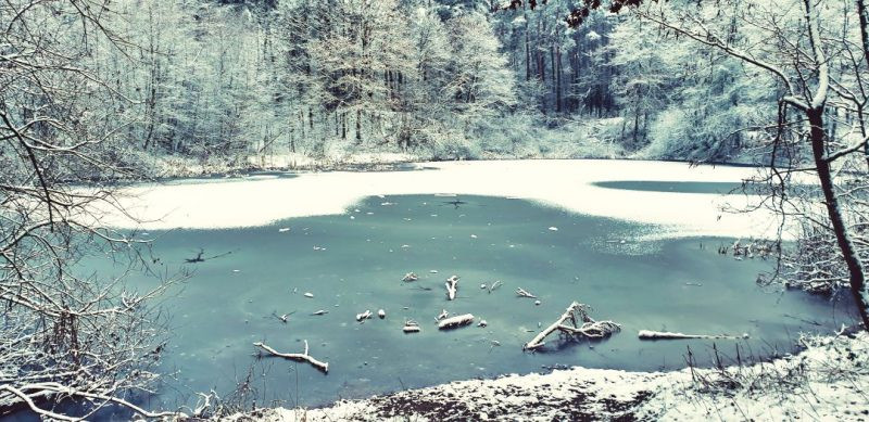 Zeigt einen teilweise gefrorenen See in Blickrichtung Darmer Friedhof. Dieser ist umringt von Bäumen, welche eingeschneit sind.