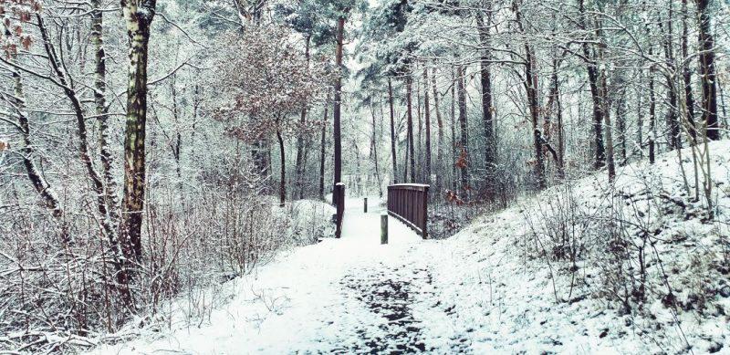 Weg mit Hozbrücke im Darmer Friedhofswäldchen.
